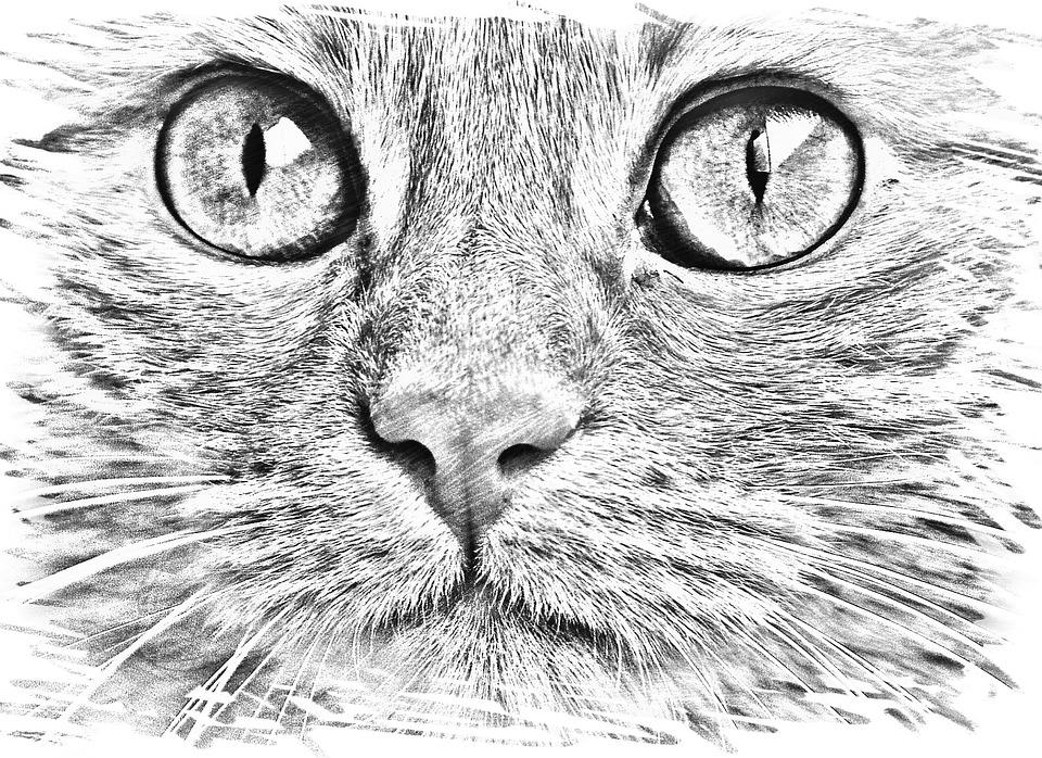 kattenhoofd kleurplaat kidkleurplaat nl